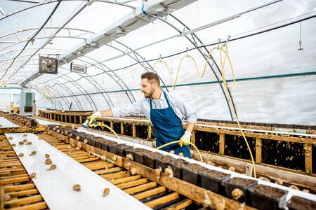 Handsome worker washing shelves with water gun, taking care of the snails in the hothouse of the farm, wide angle view with copy space