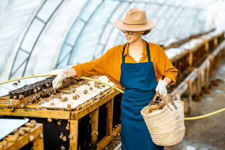 Female worker feeding snails, powdering food on the special shelves in the hothouse of the farm. Concept of farming snails for eating Stock fotó - 127936365