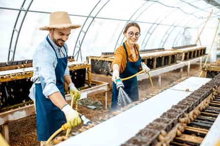 Man and woman working in the hothouse on a farm for growing snails, washing shelves with water gun. Concept of farming snails for eating