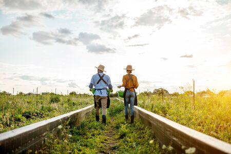 Zwei Bauern oder Agronomen, die auf dem Ackerland spazieren gehen, um Schnecken zu züchten, hintere Weitwinkelansicht. Konzept der Agrarwirtschaft und Landwirtschaft Standard-Bild