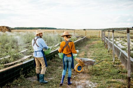 Two well-dressed farmers or agronomists walking on the farmland for growing snails, rear wide angle view. Concept of agribusiness and farming