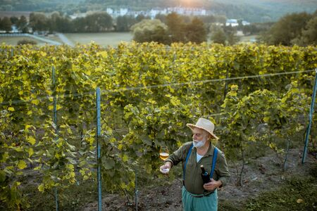 Senior winemaker tasting wine, while standing with wine glass and bottle on the vineyard, wide landscape view from above on a sunset Banco de Imagens