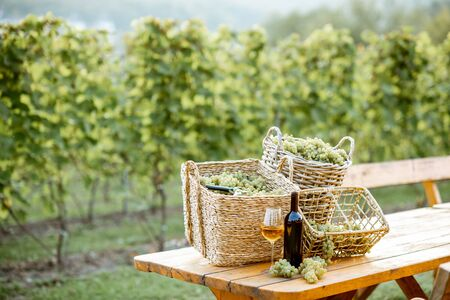 Wine on the table with baskets full of freshly picked up grapes on the vineyard 写真素材