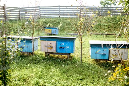 Small traditional apiary with wooden beehives on the green meadow on a sunny evening