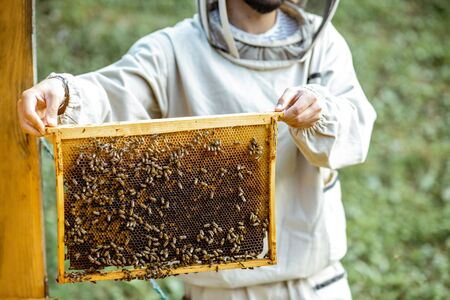 Beekeeper in protective uniform getting honeycombs from the wooden hive, working on the apiary Banque d'images - 132048009