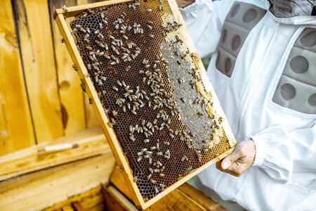 Beekeeper getting honeycombs with bees from the wooden hive, close-up view