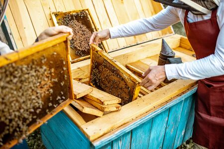 Beekeepers working on the apiary, getting honeycomb frames from the wooden beehives, close-up view Stock Photo