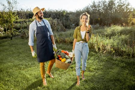 Man and woman carrying basket full of freshly picked up homegrown vegetables at the countryside on a sunny evening Stok Fotoğraf