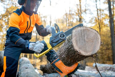 Professional lumberjack in protective workwear working with a chainsaw in the forest, sawing a thick wooden log