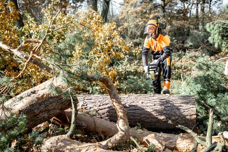 Lumberman in protective workwear sawing tree trunk in the forest. Concept of a professional logging