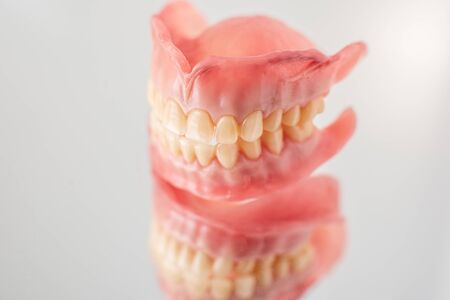 Close-up studio shot of artificial jaw model on a mirror background
