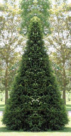 topiary: Cone topiary