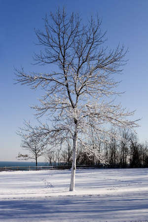 Snow laden winter tree against a blue sky and lake photo