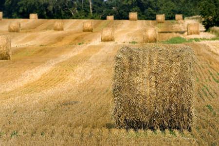 Hay rolls in a farmers field photo