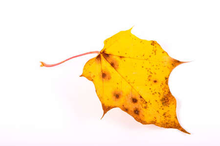 Yellow Fall Leaf Imagens