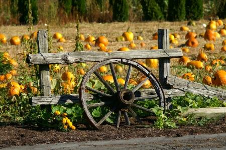 fence: WAGONWHEEL IN THE PUMPKIN PATCH