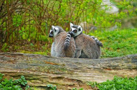 buddies: Animal buddies