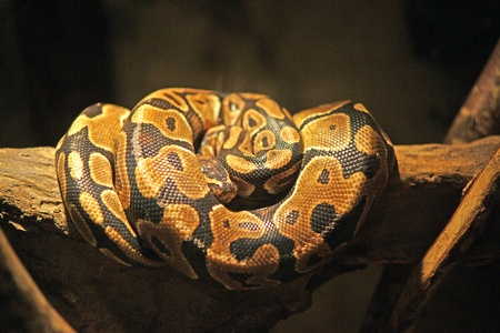 Slapende slang