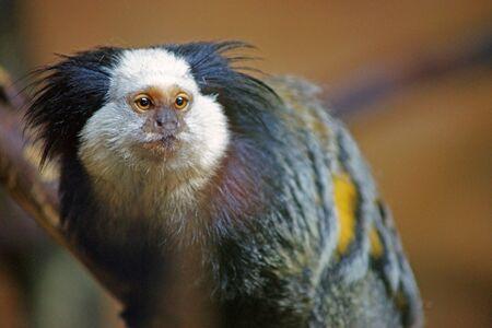 오래 된 원숭이 찾고