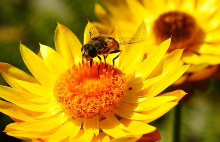 BEE PICKING AND CHOOSING Фото со стока