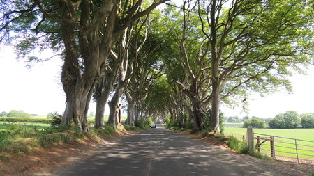 hedges: Dark Hedges, Ireland