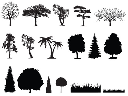 cypress: silhouette of tree grass Illustration