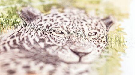 detail of a fifty reais banknote, Brazilian jaguar stamped on a Brazilian banknote of 50 reais.