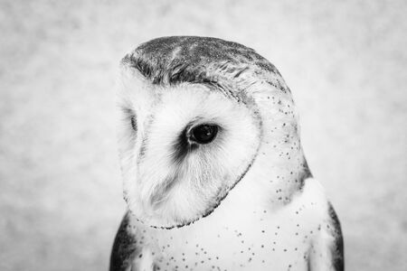 Photo of an owl in high resolution, face of a bird of prey. Owl with isolated background on white. Stock Photo
