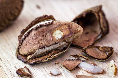Brazil nut, Amazon nut, acre nut, Brazil nut, Amazon nut, Bolivian nut, Toquei or Tururi, is a large tree, very abundant in northern Brazil and Bolivia , whose fruit contains the chestnut.