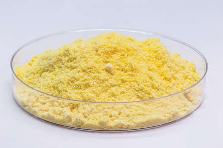 sulfur powder in petri dish, chemical for industrial use, isolated white background.