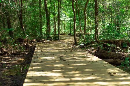 Walk on a boardwalk through a forest during the day at Memorial Park Arboretum Houston, TX