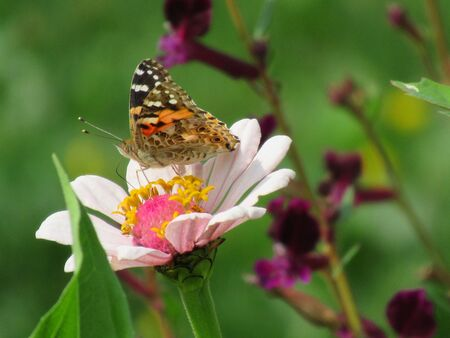 Butterfly on a blooming flower in the garden