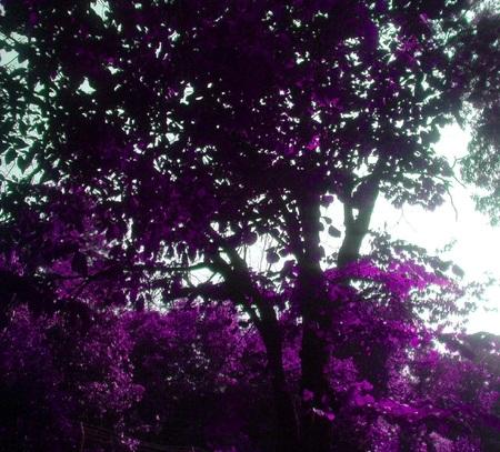 Those Glamour Trees
