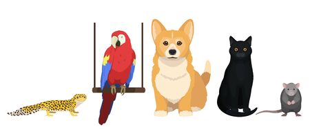 House pets vector illustration. Cat, dog, parrot, leopard gecko and mouse isolated on white background, domesticated animal.  イラスト・ベクター素材