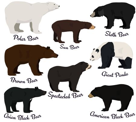 Different species of bears vector illustration. Eight bear species of the world.