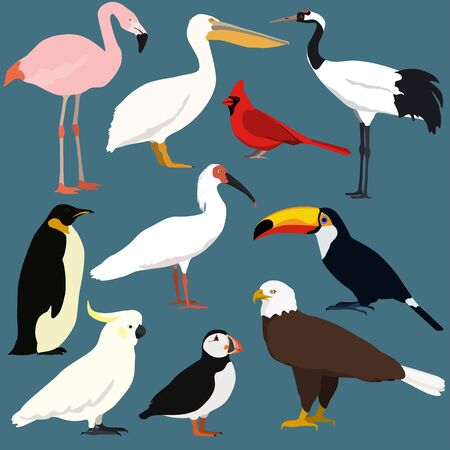 Birds collection. Crested ibis, japanese red crowned crane, cockatoo parrot,pelican,toucan,puffin,flamingo,penguin,bald eagle, red northern cardinal. Stock Illustratie