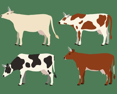 Cows of different colors set. Vector illustration.