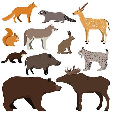 Vector set of cartoon forest animals. Brown bear, raccoon, squirrel, spotted deer, lynx, marten, wild boar, elk, wolf, fox, hare. Ilustración de vector