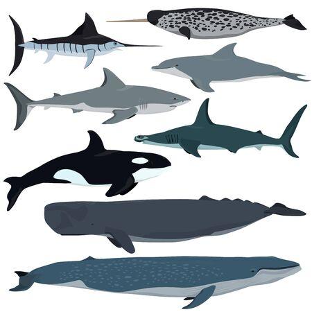 Vector set of cartoon sea animals. White shark, bottlenose dolphin, narwhal, hammerhead shark, blue whale, sperm whale, swordfish, killer whale.