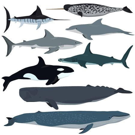Vector set of cartoon sea animals. White shark, bottlenose dolphin, narwhal, hammerhead shark, blue whale, sperm whale, swordfish, killer whale.