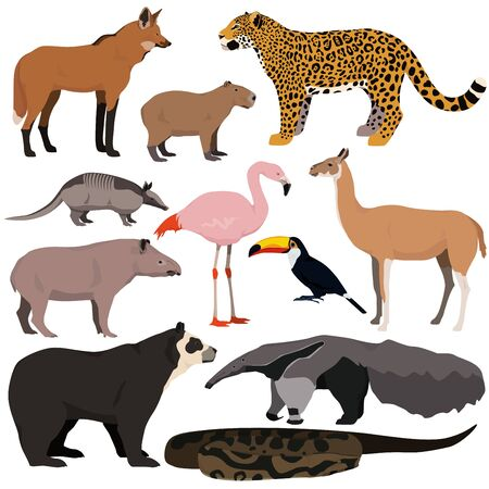 Vector set of cartoon south american animals. Jaguar, anaconda, flamingo, maned wolf, tapir, capybara, anteater, armadillo, toucan, guanaco, spectacled bear. 向量圖像