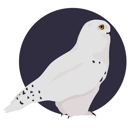 White polar owl vector illustration. Snowy owl on blue background. Stock Illustratie