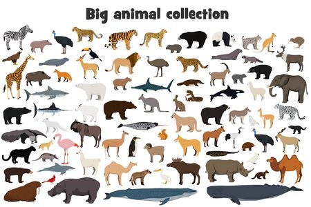 Big animal collection. Set of wild forest, arctic, jungle, mountain, african, australian animals. Realistic animals. 向量圖像