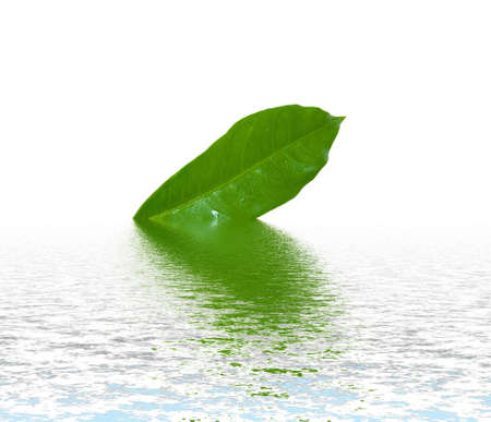 Green leaf on rippled water