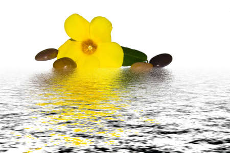 Flower with massage stones on water Stock Photo