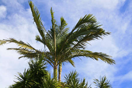 Palm tree against blue sky Stock Photo