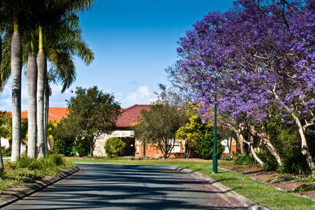 Pretty suburban street with Jacaranda in bloom Stock Photo