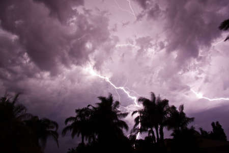 Lightning strikes at night with silhouettes of palm trees photo