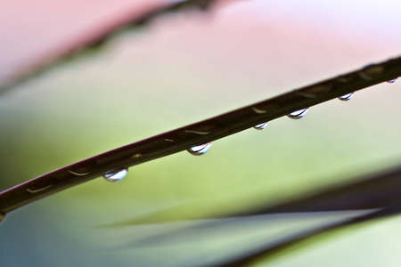Water drops on a blurred background Stock Photo