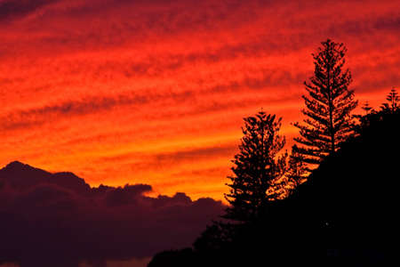 Red sunset with silhouette of trees Stock Photo
